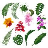 Uppsättning av den tropiska blommabuketten Vektorillustration av sidor och filialer royaltyfri illustrationer