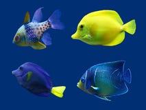 Uppsättning av den tropiska fisken. Royaltyfria Foton