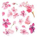 Uppsättning av den vattenfärgsakura blomman Arkivfoto