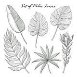 Uppsättning av dendrog palmblad och proteablomman Royaltyfria Bilder