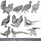 Uppsättning av detaljerad hand drog modiga fåglar stock illustrationer