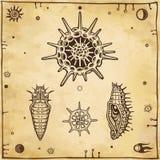 Uppsättning av diagrambilder: docka av ett kryp, larv, radiolaria royaltyfri illustrationer