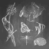 Uppsättning av djur på svart tavlabakgrund Colibri pelikan, fjärilen, fisken, igelkotten, slända skissar vektor Arkivfoto