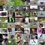 Uppsättning av 48 djurfoto Arkivbilder