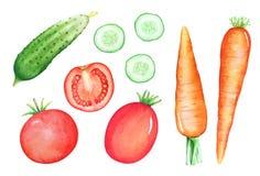 Uppsättning av drog grönsaker för vattenfärg hand Fotografering för Bildbyråer
