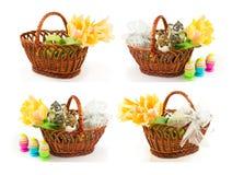 Uppsättning av easter vårbegrepp med ägg, easter kanin i Royaltyfri Foto