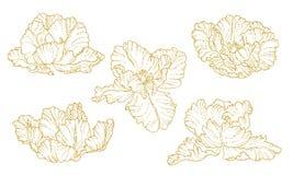 Uppsättning av en-färgade skisserade tulpan Arkivfoto