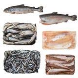 Uppsättning av en olik fryst fisk royaltyfri foto