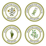 Uppsättning av etiketter för nödvändig olja: hypericum citronverbena, myrra Royaltyfria Foton
