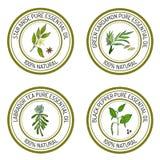 Uppsättning av etiketter för nödvändig olja: stjärnaanis, grön cardamon, labrado Fotografering för Bildbyråer