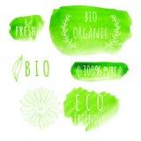 Uppsättning av etiketter för organisk mat för vattenfärg Eco produkt Arkivfoto