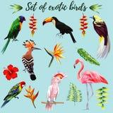 Uppsättning av exotiska fåglar vektor illustrationer