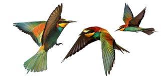 Uppsättning av färgfåglar i flykten som isoleras på en vit bakgrund arkivfoto