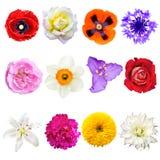 Uppsättning av färgrika blommor som isoleras på vit bakgrund Royaltyfri Fotografi