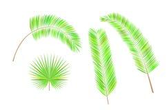 Uppsättning av färgrika palmblad Fotografering för Bildbyråer