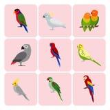 Uppsättning av färgrika papegojasymboler Arkivfoton