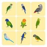 Uppsättning av färgrika papegojasymboler Fotografering för Bildbyråer