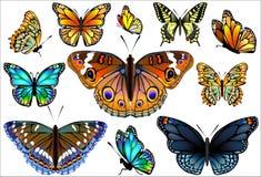 Uppsättning av färgrika realistiska isolerade fjärilar. Royaltyfri Fotografi