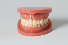 Uppsättning av falska tänder på vit Royaltyfria Foton