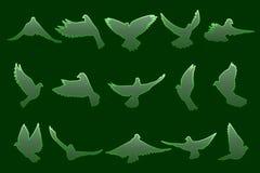 Uppsättning av flyggräsplanduvor på mörker - grön bakgrund Arkivfoton