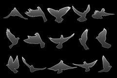 Uppsättning av flyggrå färgduvor på svart bakgrund Arkivfoto