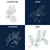 Uppsättning av fyra hand drog matvara och medicinalväxter royaltyfri illustrationer
