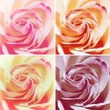 Uppsättning av fyra varianter: Röda Rose Flowers Royaltyfri Fotografi