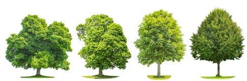 Uppsättning av grön trädlönn, linde, kastanj Naturobjekt fotografering för bildbyråer