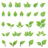 Uppsättning av gröna sidadesignbeståndsdelar Royaltyfri Fotografi