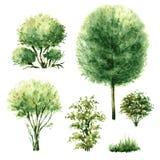 Uppsättning av gröna träd och buskar Arkivbild