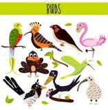 Uppsättning av gulliga tecknad filmdjurfåglar som bor i olika hörn av planeten skogarna och djunglerna Flamingo kiwi, skata, c Arkivfoton