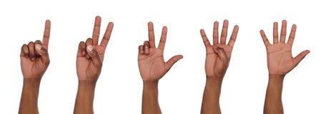 Uppsättning av händer för svart man` s Manliga handshowdiagram som räknar Royaltyfria Bilder