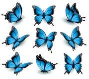 Uppsättning av härliga blåa fjärilar Arkivbild