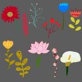Uppsättning av härliga blommor för ljus vektor Arkivfoto