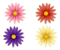 Uppsättning av härliga färgrika blommor Arkivbilder
