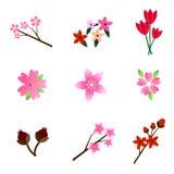 Uppsättning av härliga färgrika blommor Fotografering för Bildbyråer