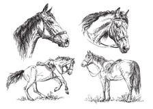 Uppsättning av hästar för vektorhandteckning i svartvitt Arkivfoton