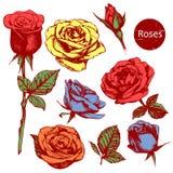 Uppsättning av högt detaljerade färgrika hand-drog rosor vektor illustrationer