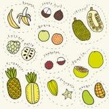 Uppsättning av hand dragen del 1 för tropiska frukter Royaltyfria Foton