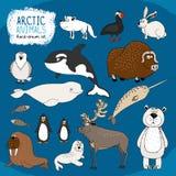 Uppsättning av hand-drog arktiska djur Fotografering för Bildbyråer