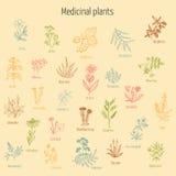 Uppsättning av hand drog medicinska örter stock illustrationer