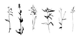 Uppsättning av hand drog ogräsfältörter Skissa eller klottra stilvektorillustrationen Arkivbild