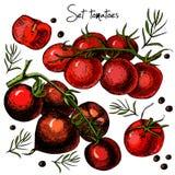 Uppsättning av hand drog tomater Royaltyfri Fotografi