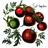 Uppsättning av hand drog tomater som isoleras på vit Royaltyfri Foto