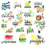 Uppsättning av hand drog vattenfärgetiketter och klistermärkear av frukt Arkivfoton