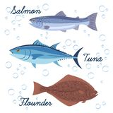 Uppsättning av havsfisken Vektor isolerade symboler av fisken Lax, tonfisk och plan fisk vektor illustrationer