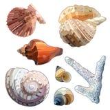 Uppsättning av havsskal och korall Arkivbilder
