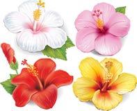 Uppsättning av hibiskusen stock illustrationer
