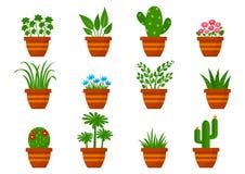 Uppsättning av houseplants i krukor också vektor för coreldrawillustration vektor illustrationer