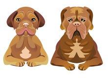 Uppsättning av hundkapplöpning som framåtriktat ser Arkivfoto